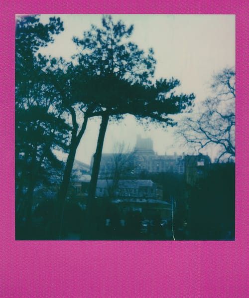 Instant Photo of Trees