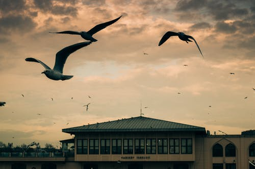 Seagulls flying over modern buildings in evening sky