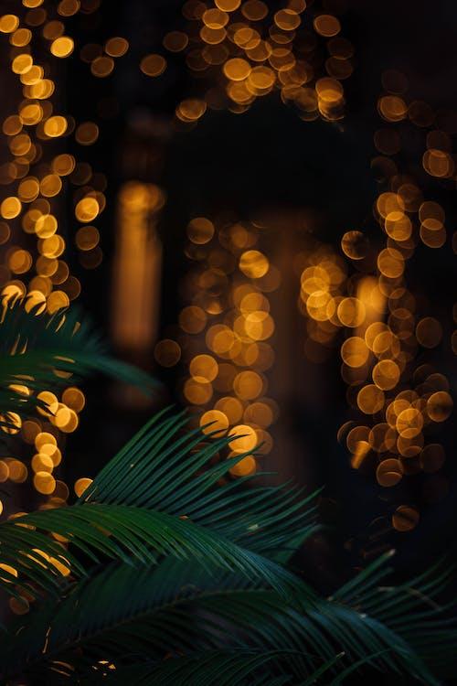 Ingyenes stockfotó Arany, boke, csillogó, dekoráció témában