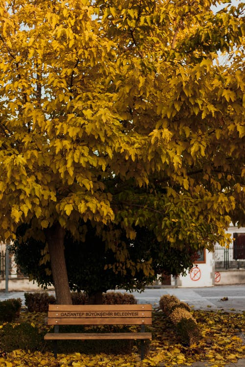 Yellow Leaves Tree on Sidewalk
