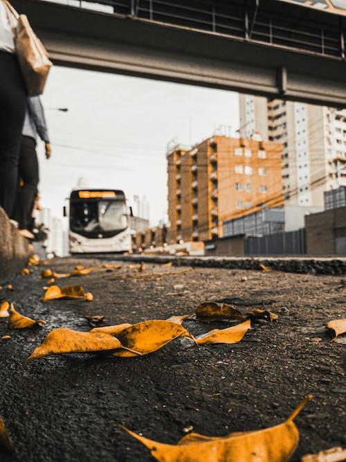Fotobanka sbezplatnými fotkami na tému asfalt, cesta, hĺbka ostrosti, listy