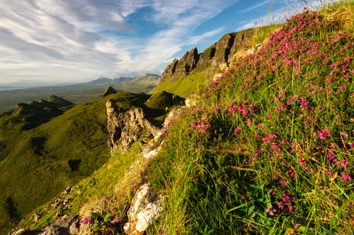 Free stock photo of cliff, flower, Quiraing, summer