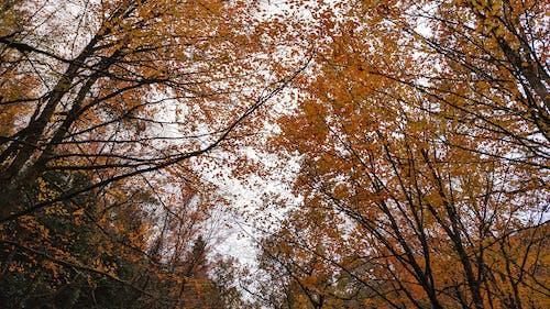 Darmowe zdjęcie z galerii z drzewa, flora, jesień, jesienne kolory