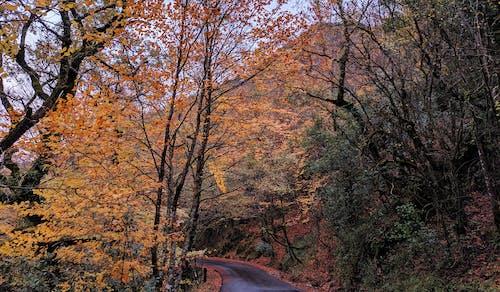 Darmowe zdjęcie z galerii z droga, drzewa, flora, jesień
