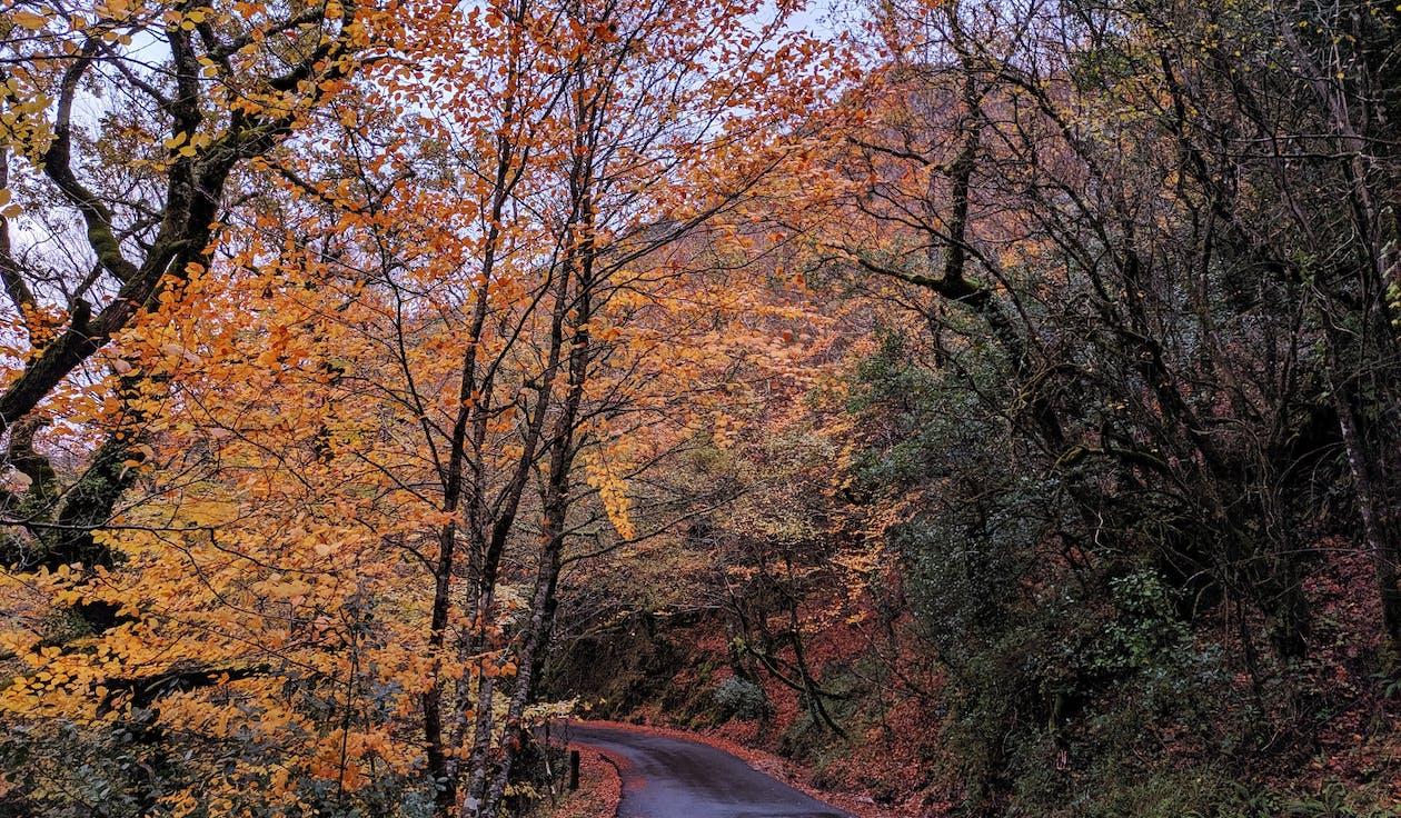 cành cây, cây, đường