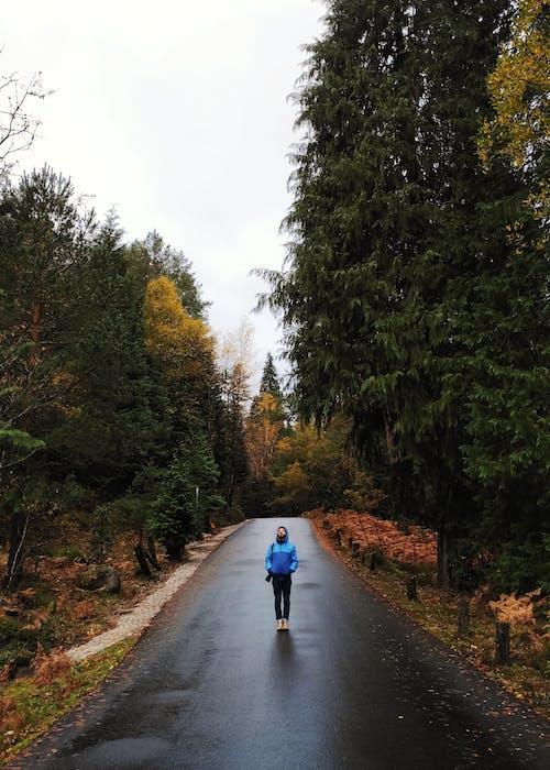 Δωρεάν στοκ φωτογραφιών με άνθρωπος, άσφαλτος, δέντρα, δρόμος