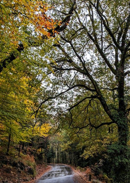 Δωρεάν στοκ φωτογραφιών με δέντρα, δρόμος, καθοδήγηση, κλαδιά δέντρων