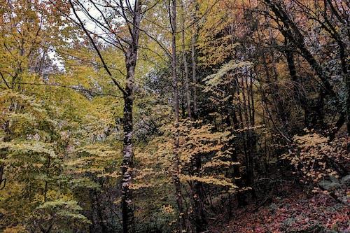 Δωρεάν στοκ φωτογραφιών με δάσος, δέντρα, περιβάλλον, σε εξωτερικό χώρο
