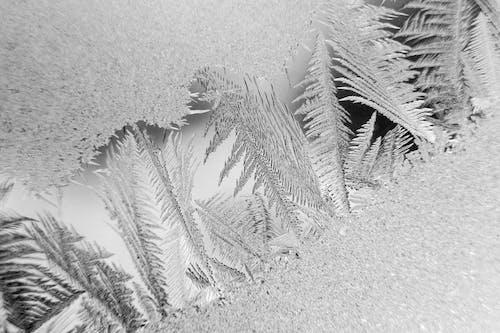 Immagine gratuita di concentrarsi, congelando, congelare, congelato