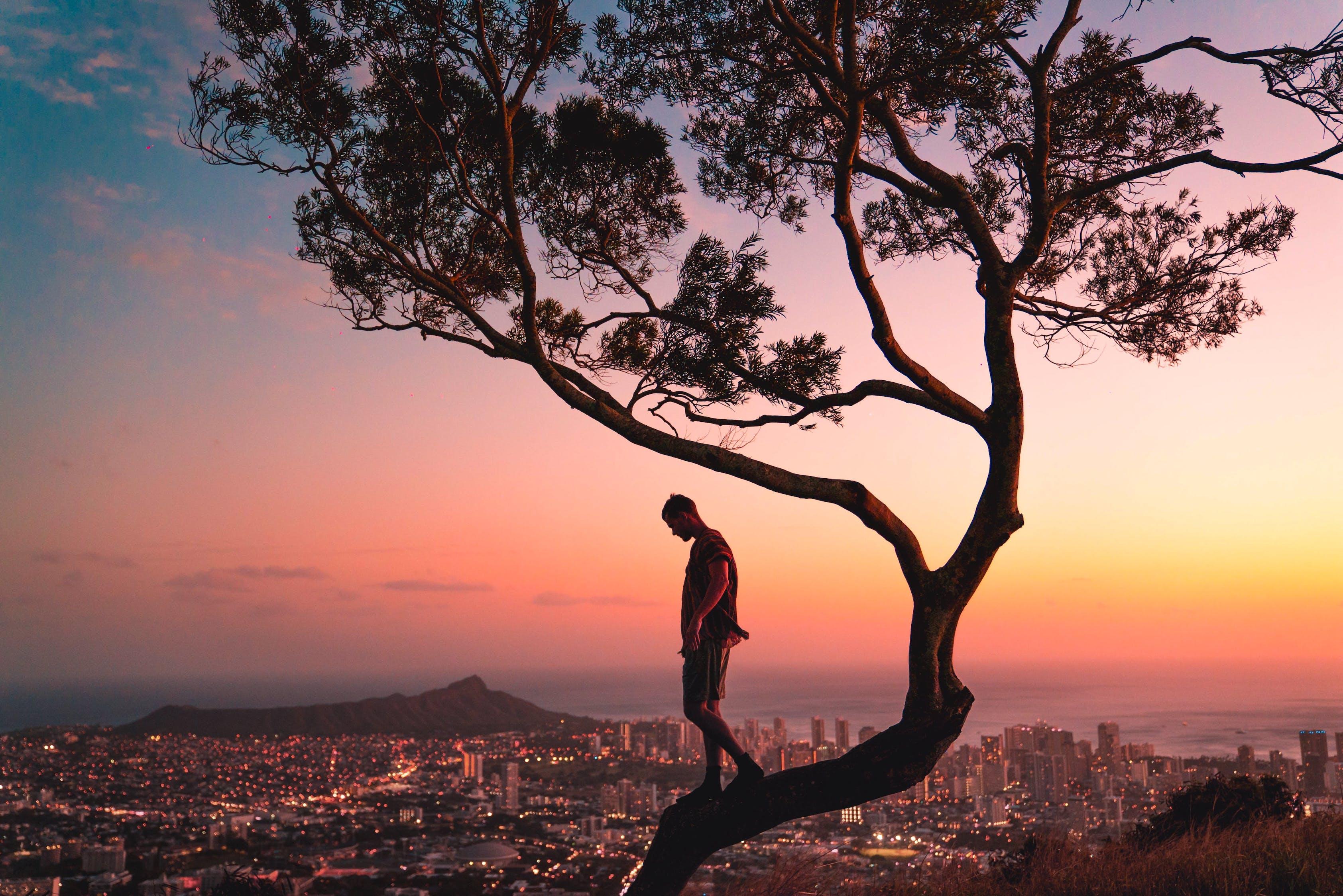 Pria Berdiri Di Cabang Pohon Saat Matahari Terbenam