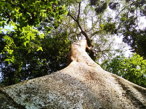 樹, 自然 的 免费素材照片