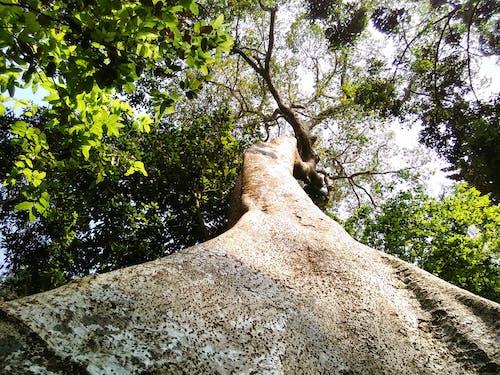 Photos gratuites de arbre, naturel