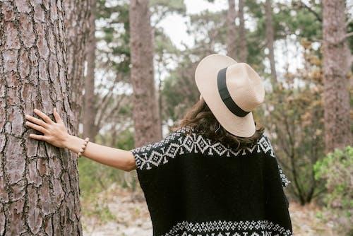 Kostenloses Stock Foto zu allein, bäume, baumstamm, draußen
