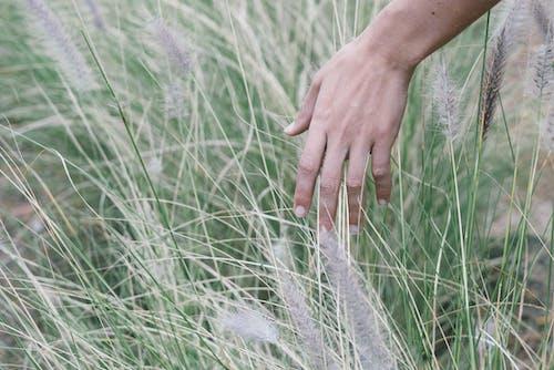 Kostenloses Stock Foto zu blühen, flora, frau, gras
