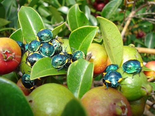 Základová fotografie zdarma na téma detailní záběr, fotografování hmyzem, hmyz, lesk