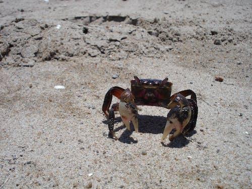 Základová fotografie zdarma na téma krab, makro, makro fotografie, makro snímku