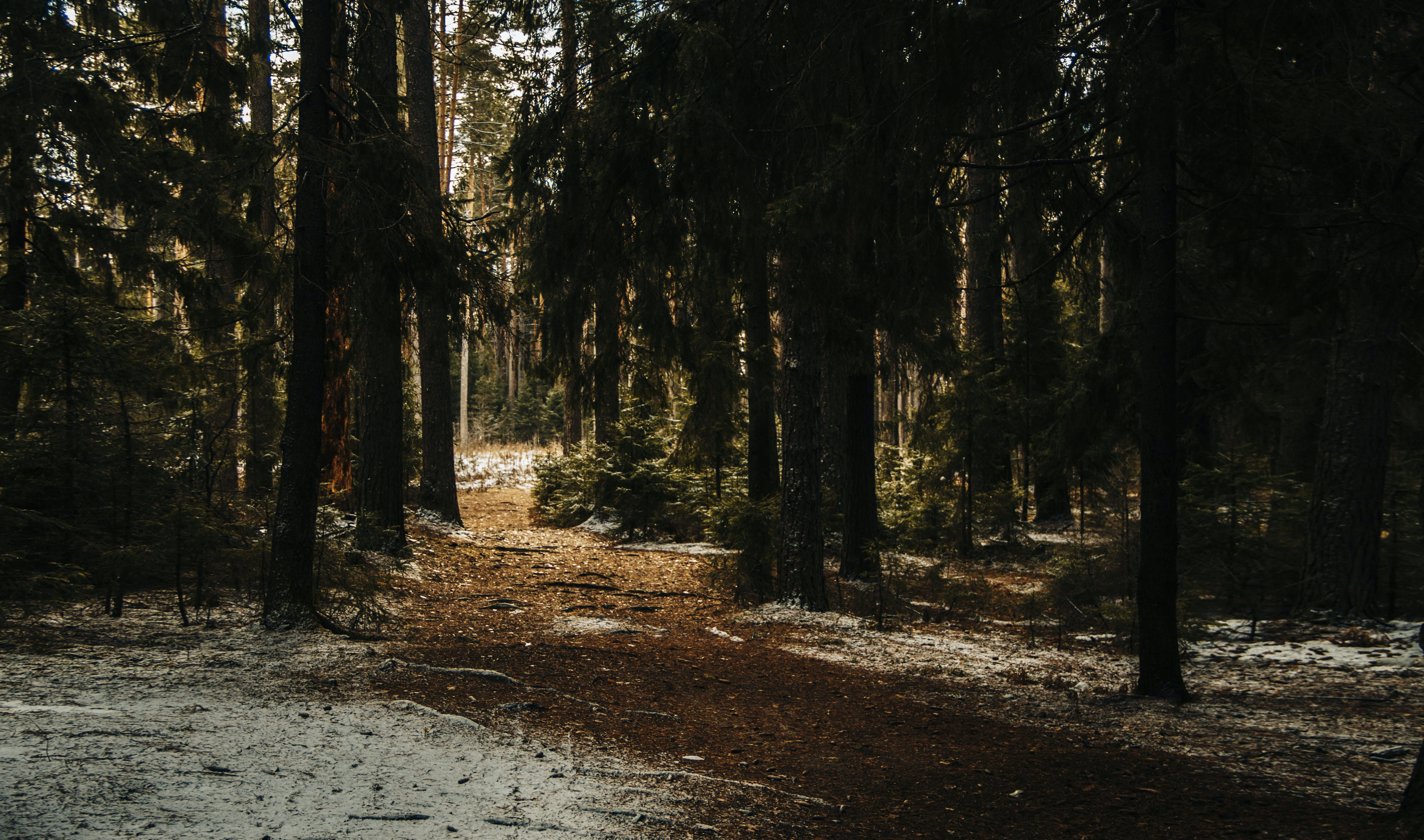 Landscape Photography of Forest Trees