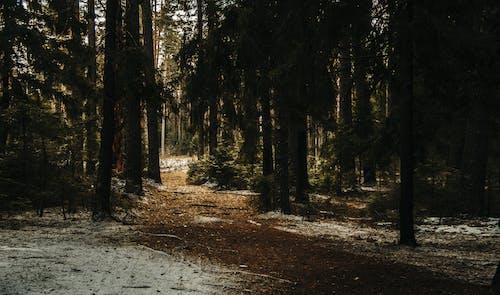 Photos gratuites de arbres, bois, environnement, forêt