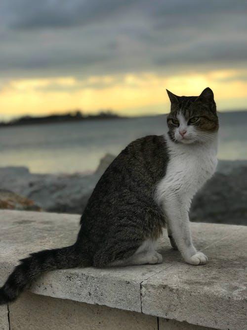 Free stock photo of cat, lady, like