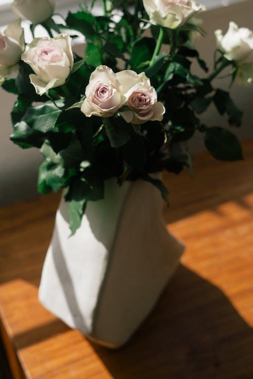 꽃꽂이, 꽃병, 꽃이 피는, 꽃잎의 무료 스톡 사진