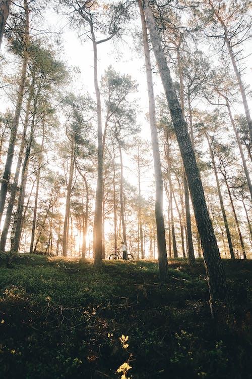 Bir Ormanın Ortasındaki Kişi