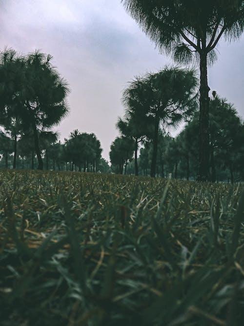 4k duvar kağıdı, açık hava, çim alanı, çim saha içeren Ücretsiz stok fotoğraf