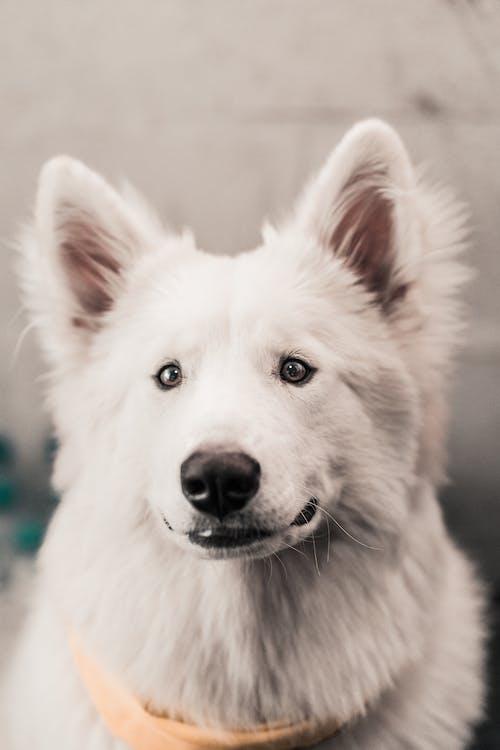 White Long Coat Medium Dog