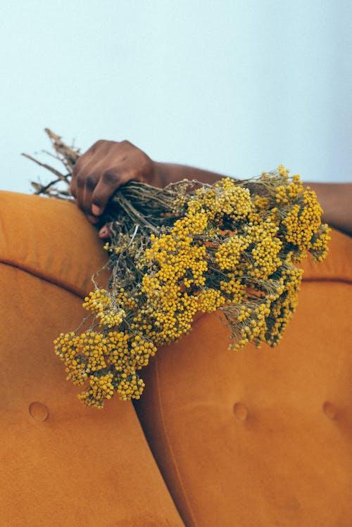 ハンド, ブーケ, ホールディング, 繊細の無料の写真素材
