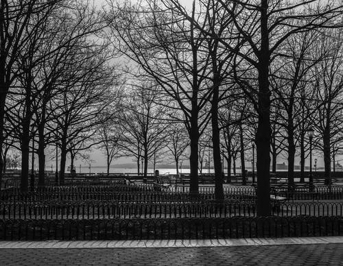Free stock photo of battery park, black and white, black and-white, Brigworkz