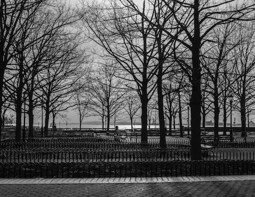 Immagine gratuita di bianco e nero, brigworkz, macchina fotografica nikon, new york city