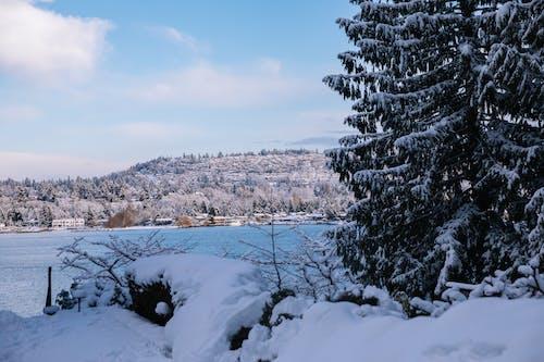 Free stock photo of snow, winter