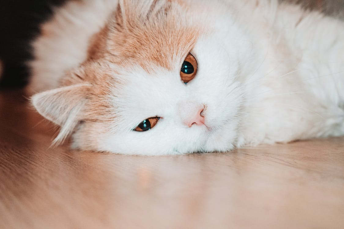 Close-Up Photo of Cat