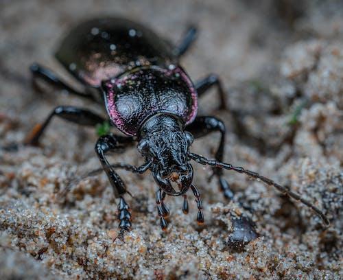 Zbliżenie Beetle