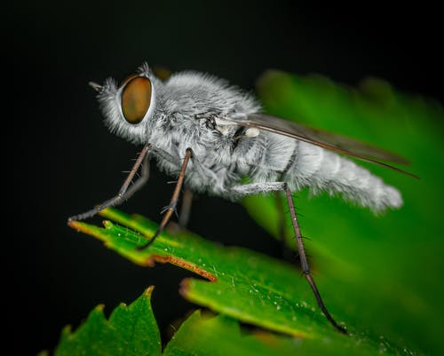 Close-Up Photo of Fly