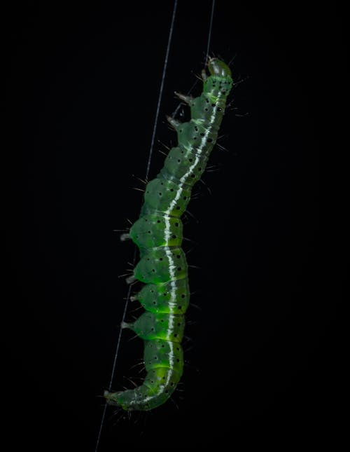 Close-Up Photo of Caterpillar