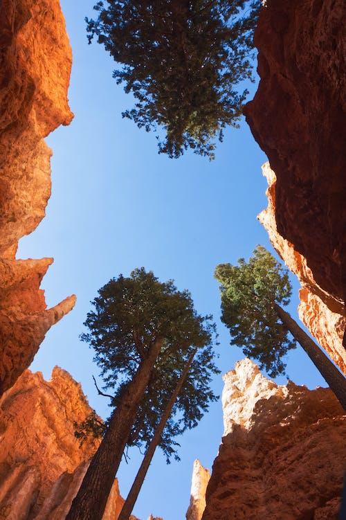 Gratis stockfoto met bomen, canyons, hemel, hoodoos