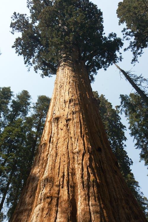 Gratis stockfoto met boom, Bos, lang, omhoog kijken