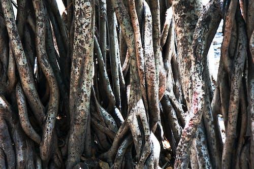 Gratis stockfoto met boom, fabriek, plant, verwarde wortels
