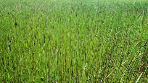 Gratis stockfoto met gebied van gras