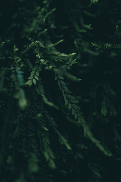 Free stock photo of green, nature