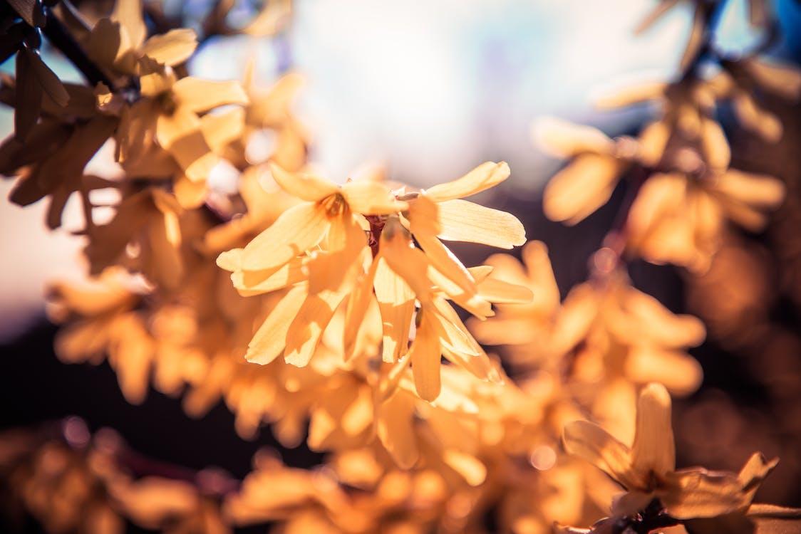 黃色的花朵,在晴朗的天空下
