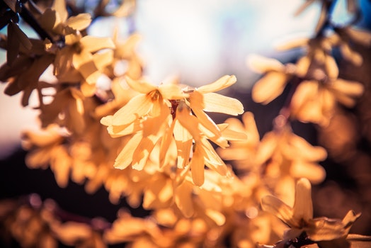 Free stock photo of light, nature, sunny, flowers
