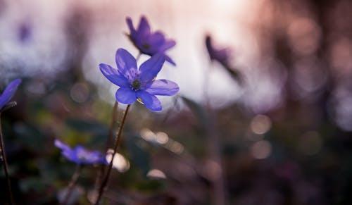 Immagine gratuita di bellissimo, bocciolo, colori, fiore