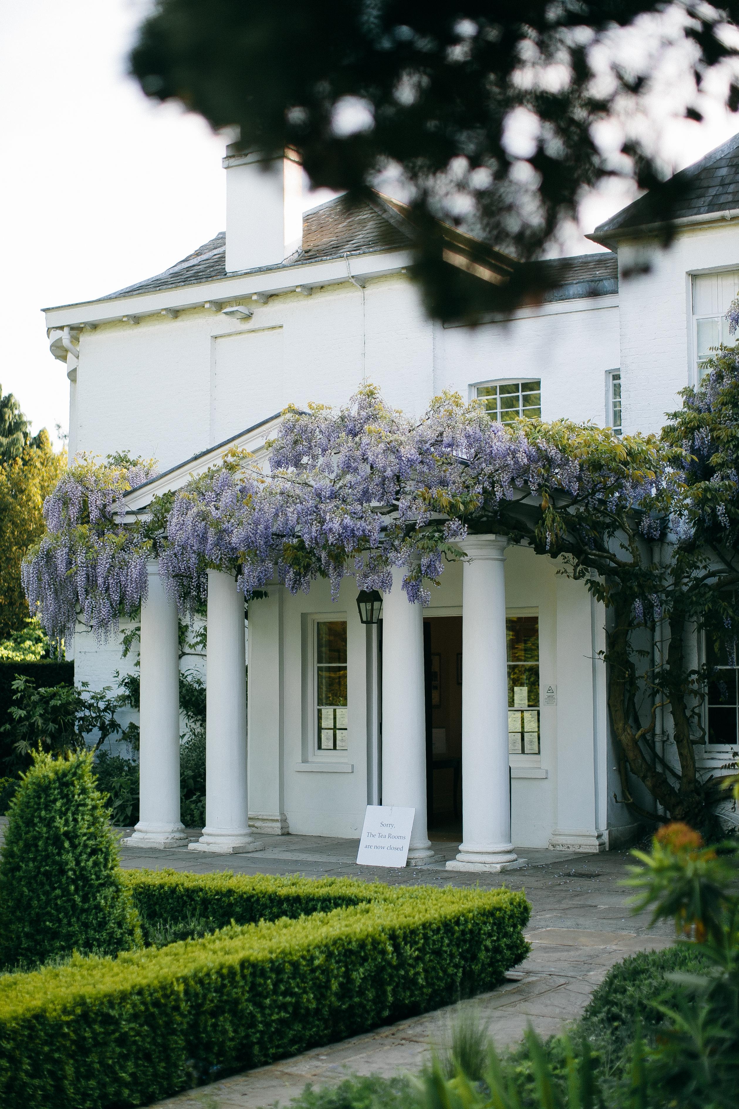 Purple Flowers and White Concrete Building