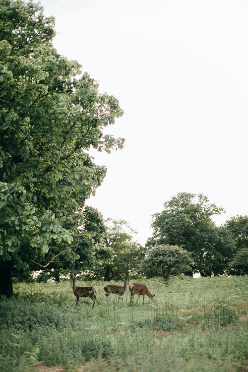 Brown Deer on Green Grass Field