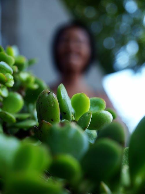 #outdoorchallenge, 天性, 抽象照片, 綠色 的 免费素材照片