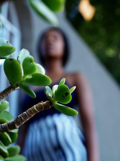 #楷模, 冬季, 变绿, 希尔蒂 的 免费素材照片