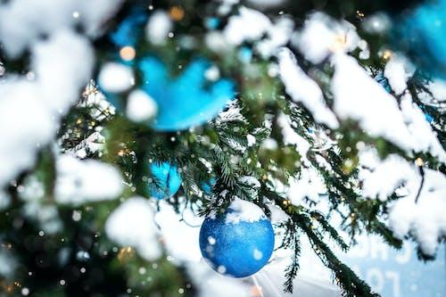 Ilmainen kuvapankkikuva tunnisteilla flunssa, ikivihreä, iloinen, joulu