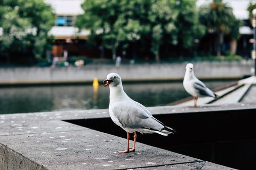Photo of a white pigeon
