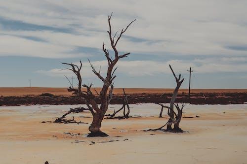 Fotos de stock gratuitas de árbol, árbol muerto, árboles muertos, Australia